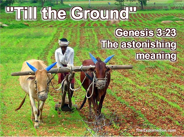 Till the Ground. Ousted from Garden of Eden to Farm?!