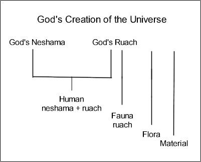 Theory of Everything. Neshama and Ruach. Their roles with God and Humans