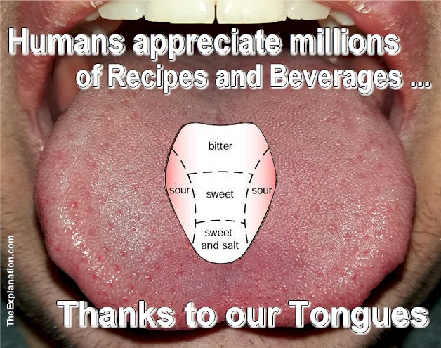 With hundreds of thousands of ingredients worldwide used for recipes and beverages, only our tongues allow us to appreciate and enjoy the textures and flavors.