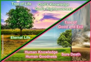 The Tree of the Knowledge of Good and Evil leads to sure Death. The Tree of Life leads to Eternal Life