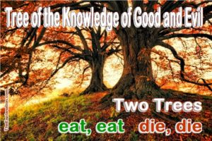 The Tree of the Knowledge of Good and Evil. Enigmatic, how can good lead to death? Let's understand.