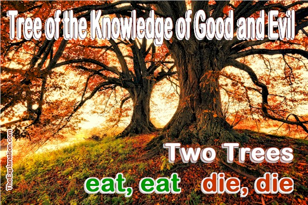 The Tree of Knowledge of Good and Evil  The Meaning  • The
