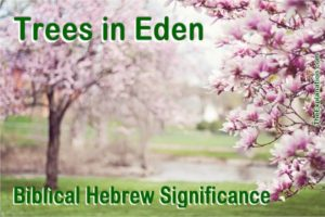 The Trees in Eden. Learn the powerful implication of the meaning of the Biblical Hebrew word for tree