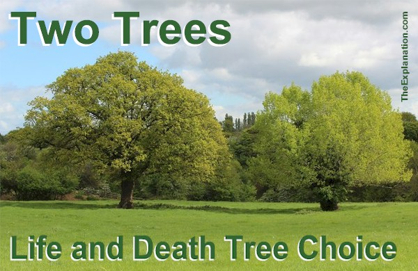 Two trees in the Garden of Eden. One tree represents Life and the other, Death. There's a choice to be made.
