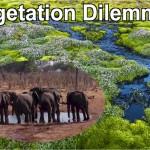 The rich peatland vegetation of... in contrast to the barren homeland of elephants in Botswana, that the vegetation dilemma